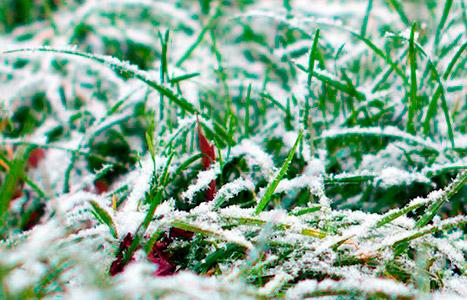 подготовка газона к зиме фото
